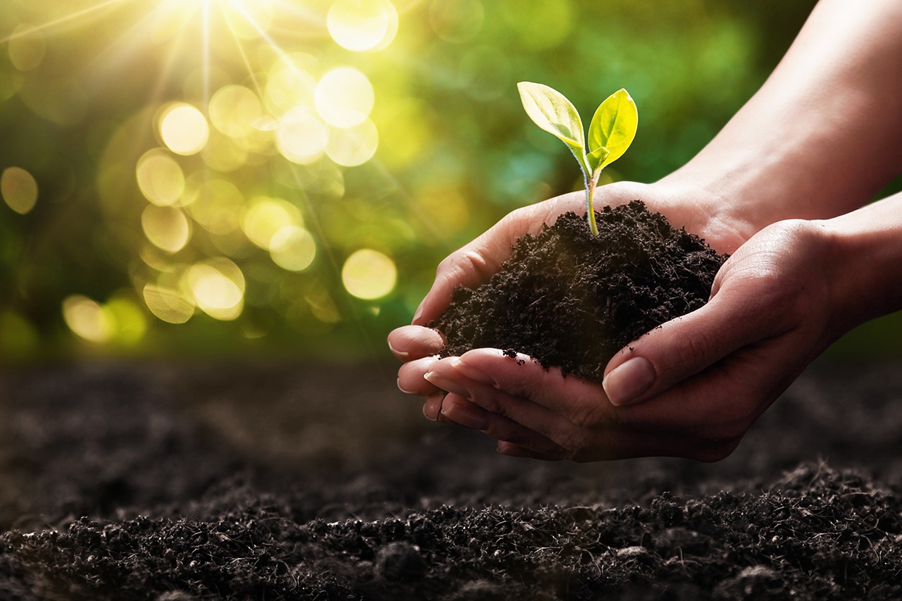 Bringing Soil to Life