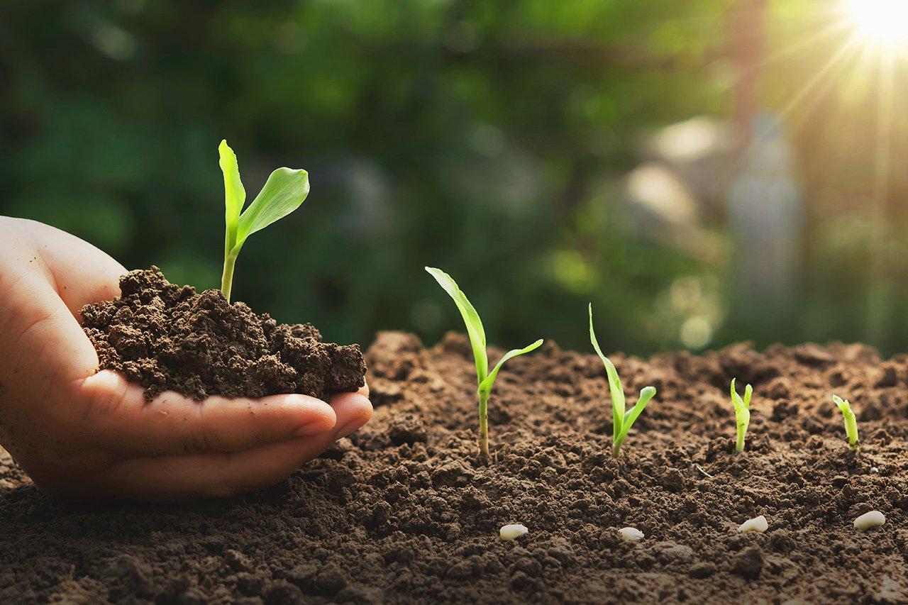 Organic soil beings used