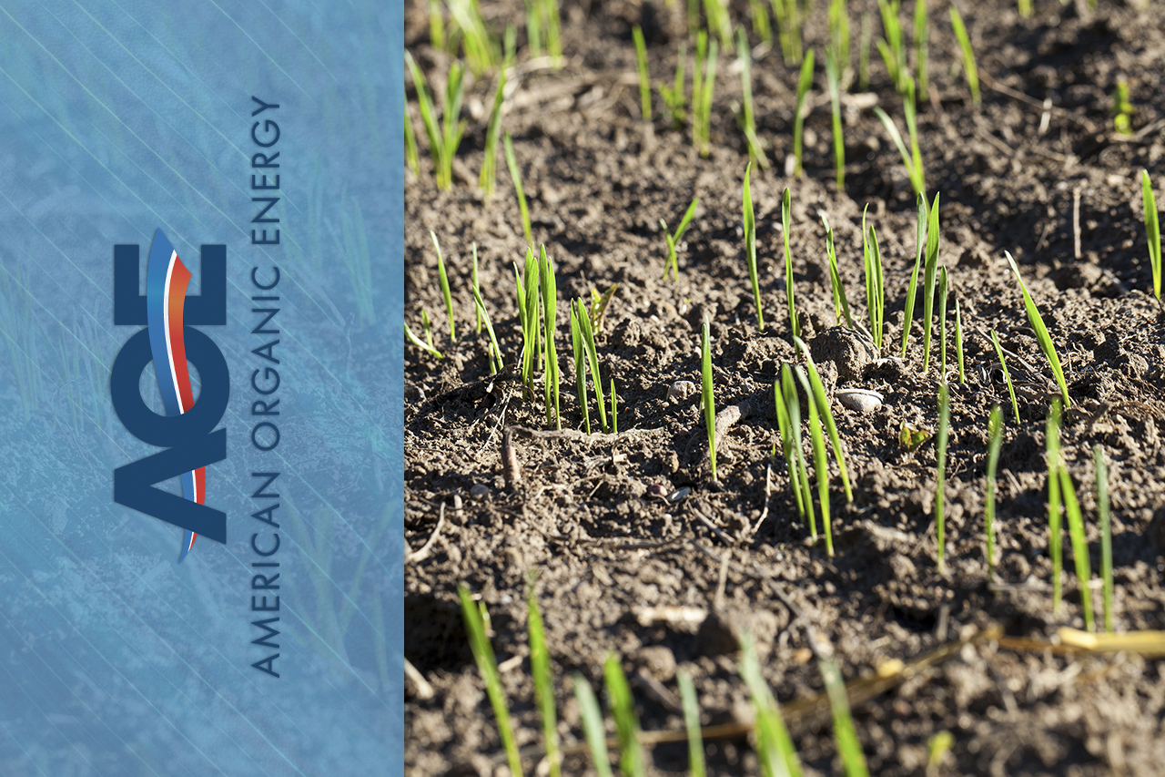 Benefits of Topdressing Your Lawn this Spring