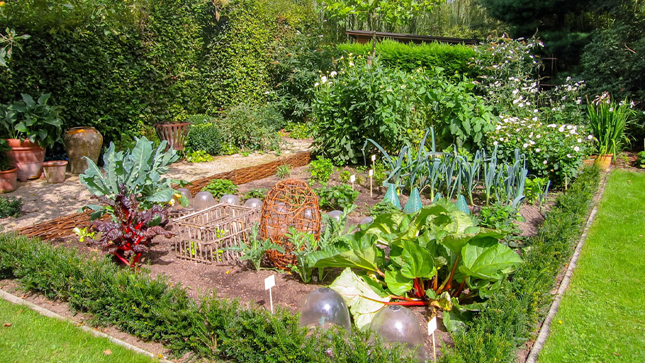 Garden with vegetables, flowers, and more.