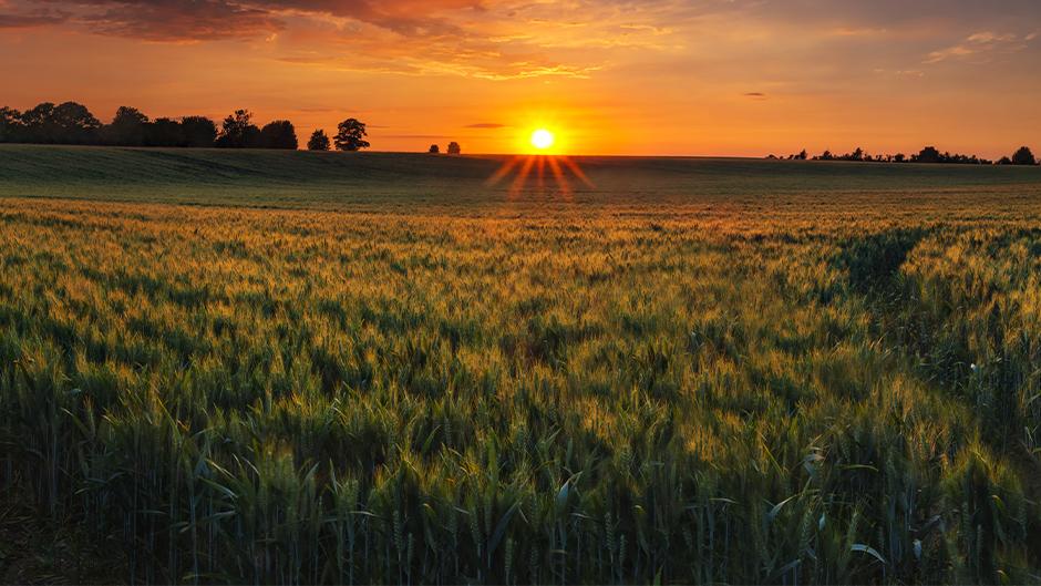 Sunset on open farmland