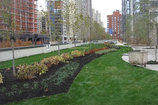 NYC Green Roof Design: Getting it Right the First Time