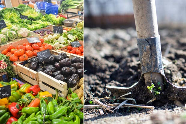 Side by Side of rake stuck in dirt and produce at a local market