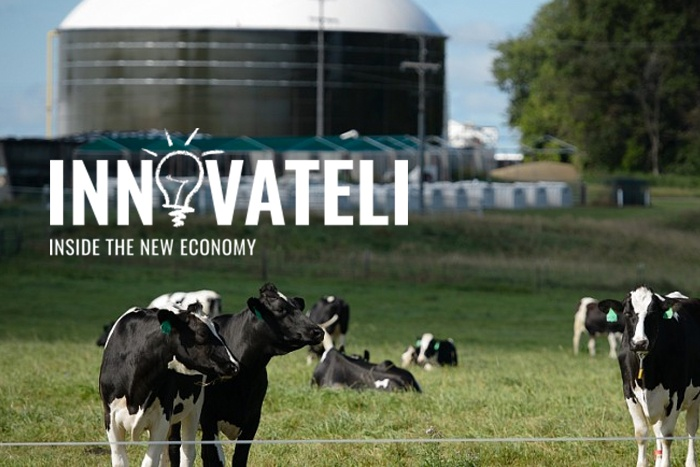 Innovate LI Logo over image of cows grazing