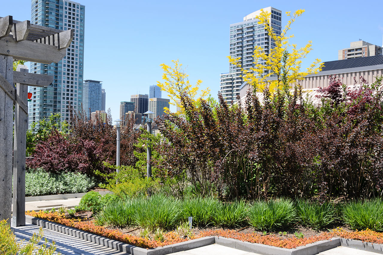 green plants and shrubs on roof against city skyline
