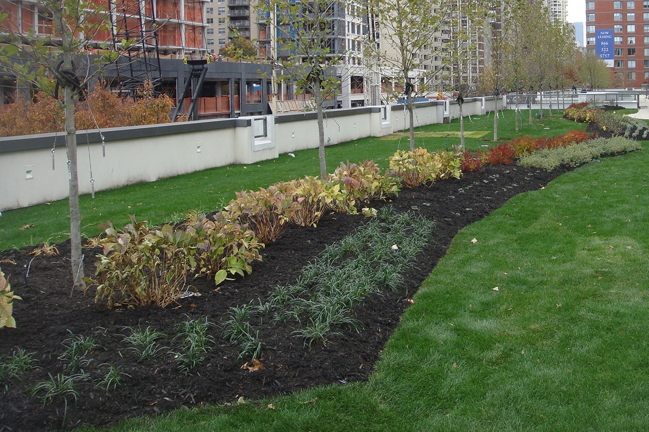 Green roof flower bed with plants on green grass