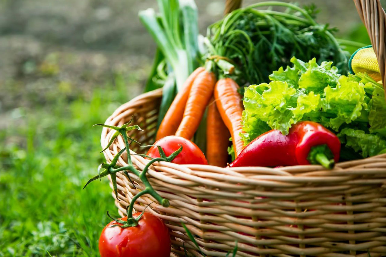 basket filled with organic vegetables