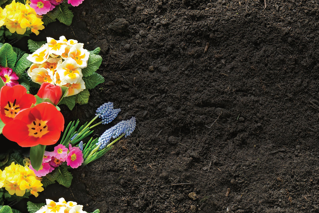 organic soil with planted flowers