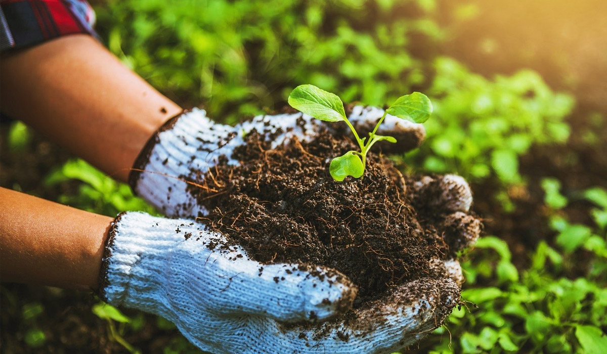 upclose of woman holding garden soil in hands