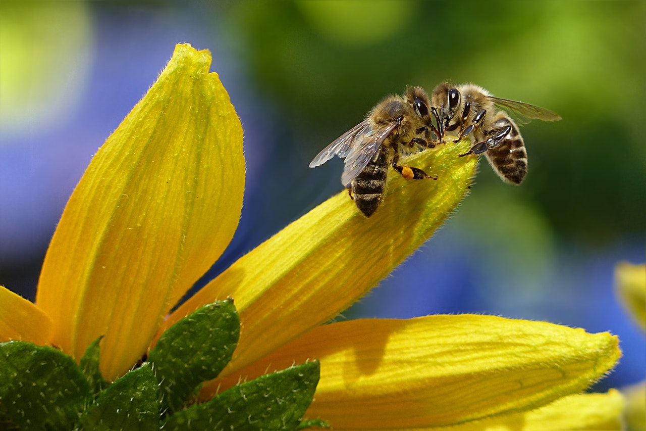 Buzzworthy: How Green Roofs Can Save Bees