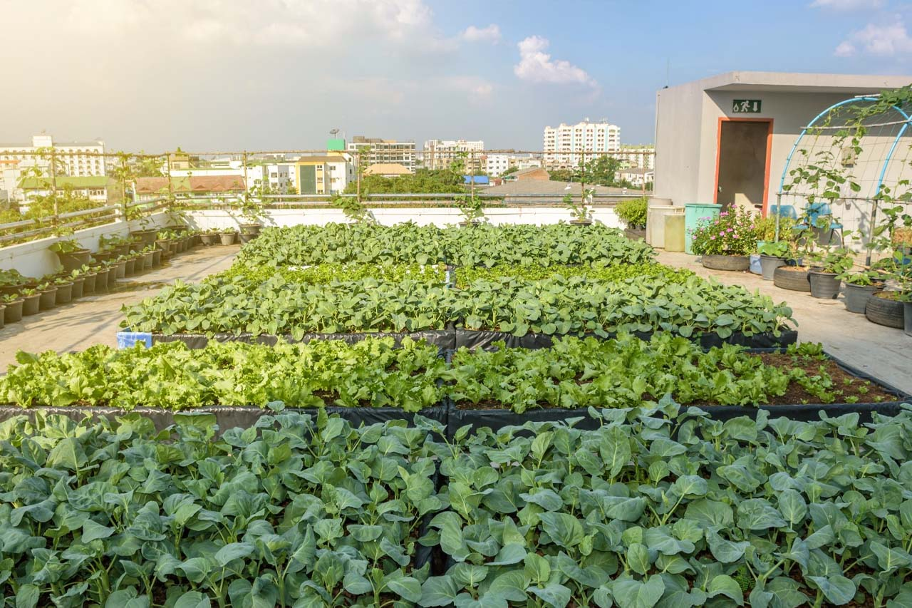 garden on the roof top of a building in a city