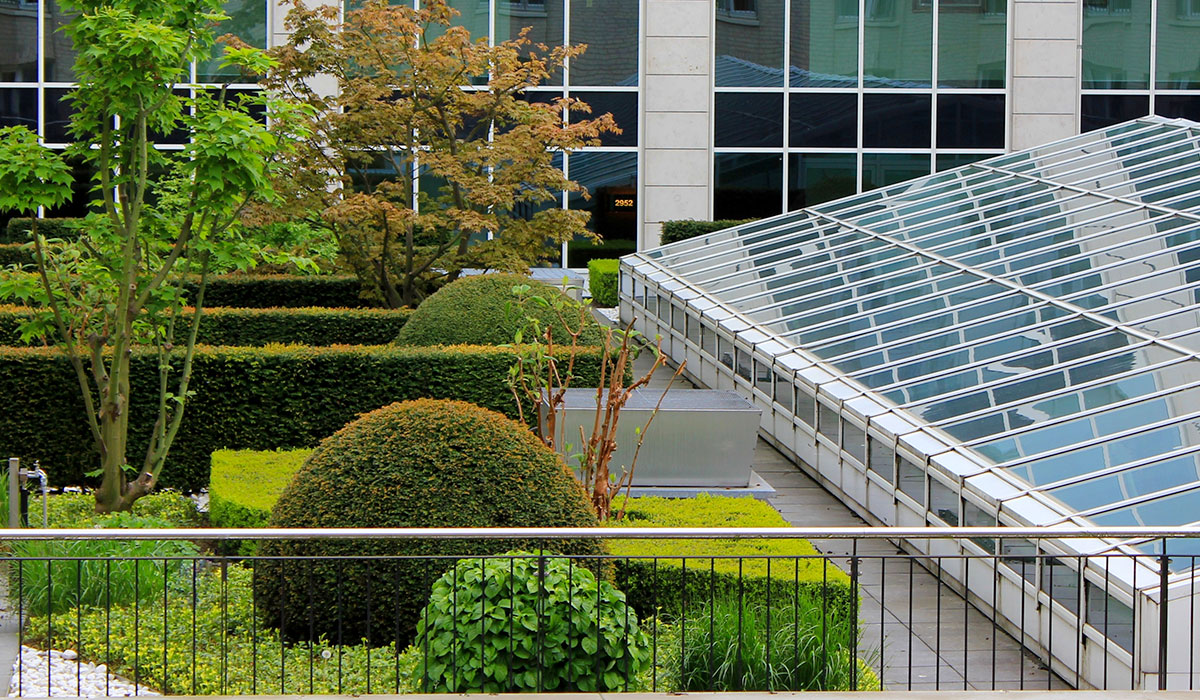 green garden on rooftop